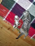 猫ちゃんぬいぐるみかわいいポーズ写真