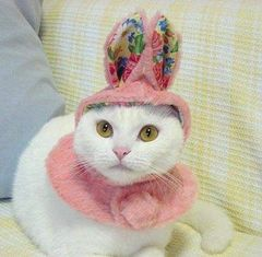 うさぎ猫かわいい画像