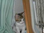 子猫は隙間好きかわいい