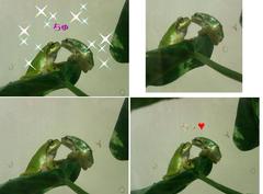 カエル王子チューキス面白画像