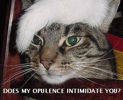 白髪のカツラを被った猫面白画像