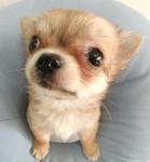 かわいい子犬画像
