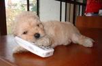 子犬携帯電話