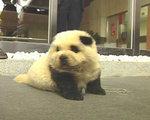 パンダ犬面白画像