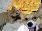 耳齧るおもしろ犬猫画像