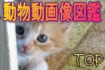 かわいい動物動画像図鑑