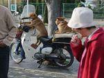カブ2ケツノーヘル犬面白画像